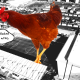 chicken football