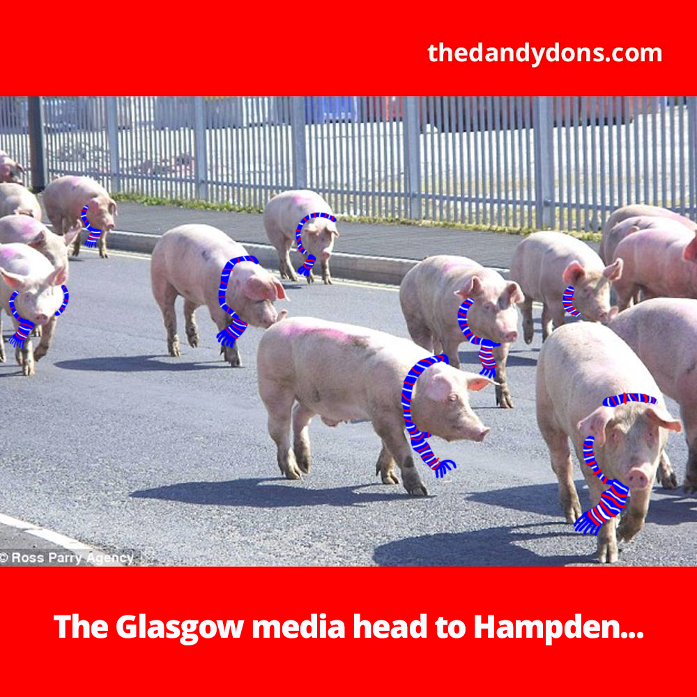 pigs hampden